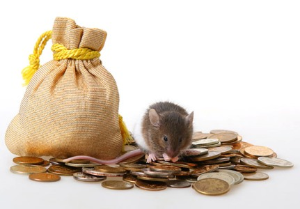 car automobile insurance cost down company premiums risk mouse money coins
